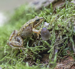 Frog and Fungi (alone68) Tags: hothfield canon nature kwt