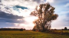 Tree | 2016 | HDR (Roland C. Vogt) Tags: olympus em5 markii | 12mm f20 hdr