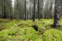 20161026098574 (koppomcolors) Tags: koppomcolors skog forest