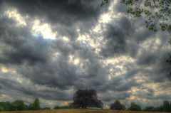 A Little Overcast (ray_anthony) Tags: tree london nature weather clouds nikon overcast hampstead hdr highdynamicrange photomatix nikor hdrphotography d5100