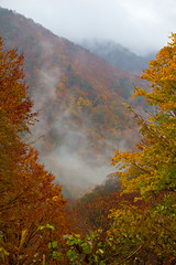 Tanigawadake fall foliage in fog (DigiPub) Tags: autumn mountain nature japan vertical fog forest outdoors photography leaf hiking tranquility nopeople valley multicolored onsale japaneseculture gettyimages mttanigawa traveldestinations colorimage famousplace tanigawadake  beautyinnature gunmaprefecture niigataprefecture  japanesefallfoliage satoyamascenery g14508601 530586867 p20141207