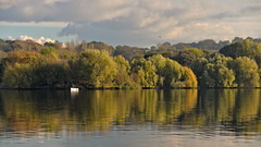Small Catch...... (klythawk) Tags: nottingham blue autumn trees orange brown sunlight seagulls white green nature yellow clouds reflections grey boat fishing nikon westlake 70300mm tamron d610 colwickpark klythawk