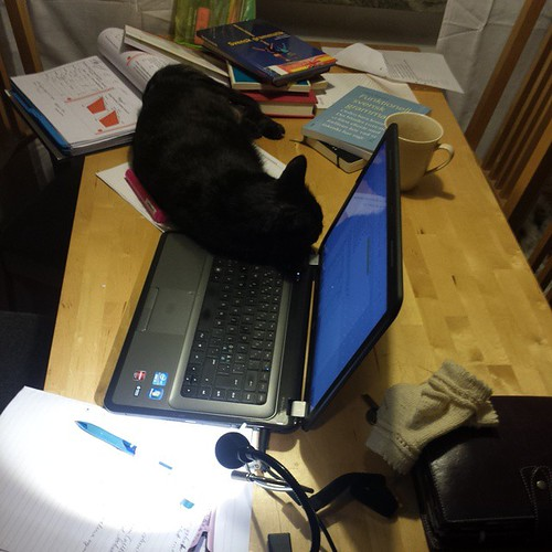 #Studying for my #exam. #school #cute #cat #stydy
