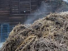 Dampfende Landluft (Sockenhummel) Tags: berlin fuji farm weihnachtsmarkt finepix fujifilm bauernhof x20 dung zehlendorf misthaufen domne domnedahlem fujix20