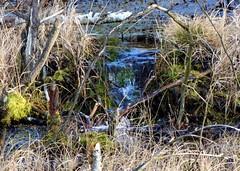 Small waterfall (Jacek Magryta) Tags: winter light lake tree nature water forest landscape lights waterfall pond poland polska jacek zgorzelec lowersilesian zielonka lowersilesia bej borydolnoslaskie zgorzeleccounty