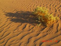 Desert  الصحراء (haidarism (Ahmed Alhaidari)) Tags: sea plant sand desert بحر صحراء رمال نبات نبتة