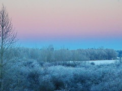 Beautiful frosty start to the day (peggyhr) Tags: blue trees sky white canada frosty fuschia alberta wetlands mauve willows 12c 25faves peggyhr bluebirdestates ♣myhatsofftoyou ♣scapes ♣mothernature dsc03547a