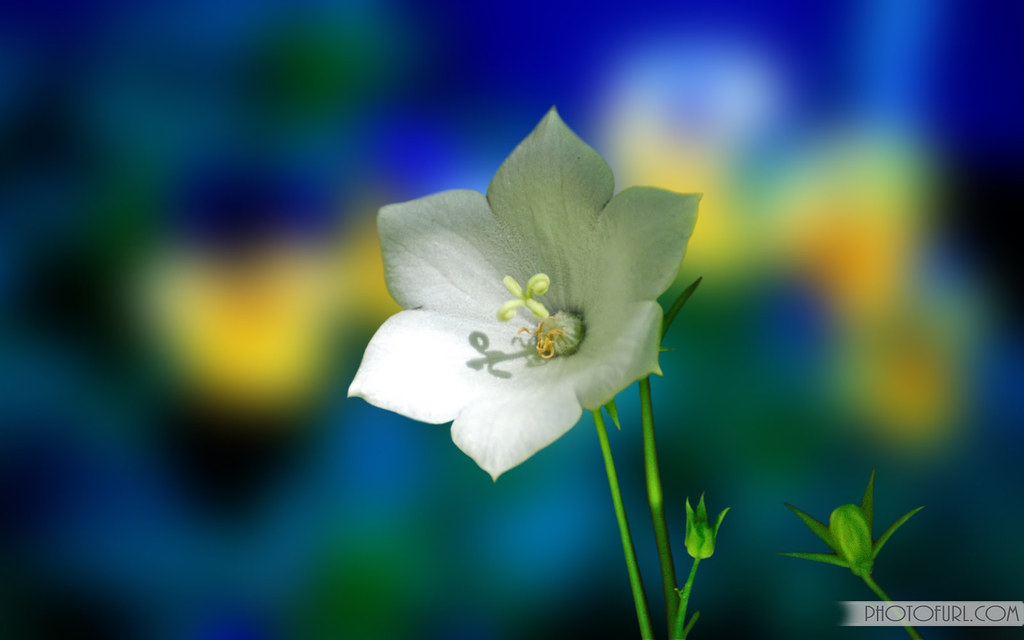 Beautiful Flower Wallpapers For Desktop Animated Images Tapeper Tags