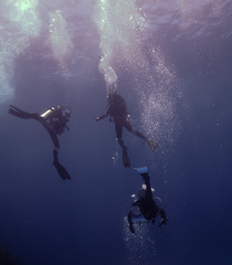Dive20150209P25 (bobmccormackmobile) Tags: underwater diving olympus lordhoweisland ballspyramid olympusem5