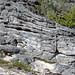Calcarenitic eolianite (Hanna Bay Member, Rice Bay Formation, Holocene; Graham's Harbour, San Salvador Island, Bahamas) 1