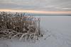 Puntarikoski - Finland (Sami Niemeläinen (instagram: santtujns)) Tags: winter lake snow ice nature suomi finland landscape frozen snowy lumi talvi maisema luonto järvi jää höytiäinen kontiolahti luminen puntarikoski häikänniemi