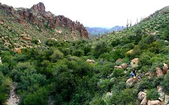 Along the Peralta Trail (justinrickmanphotography) Tags: arizona mountains nature landscape outdoors photography hiking exploring panoramic adventure trail needle wilderness weavers superstition lostdutchman peralta