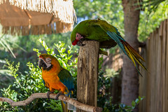 """Parrot • <a style=""""font-size:0.8em;"""" href=""""http://www.flickr.com/photos/92159645@N05/16234187922/"""" target=""""_blank"""">View on Flickr</a>"""