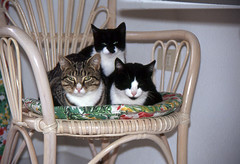 Jetzt schlägt's aber dreizehn.. (fotoculus) Tags: españa cat chat felix canarias espana felinos katze lapalma canaryislands spanien felis kanarischeinseln diascans urlaubsreise1991