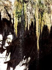 hanging moss and falling water (h willome) Tags: statepark winter arizona naturalbridge tontonaturalbridge 2015