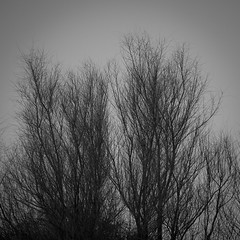 _NIK1184 (nikdanna) Tags: winter tree pentax branches albero rami interno7 blackwithe invero nikdanna