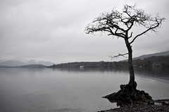 LOCH LOMOND, STIRLING, SCOTLAND_0846 (wordly images) Tags: travel trees lake water rural scotland waterfront roadtrip alnwick northumberland lochlomond