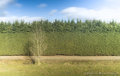 Odd one out. (PvRFotografie) Tags: longexposure trees holland tree landscape bomen rotterdam sony nederland boom nd landschap rotterdamzuid rotterdamcharlois lightcraftworkshop sonyslta99 lightcraftworkshopfaderndmkii tokina2035mmiif3545