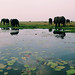 Elephant Meeting