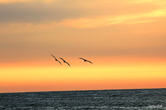 Tres (Gaby Fil ) Tags: atardecer per puestadesol atardeceres playas ocasos sudamrica tumbes zorritos costaperuana ocenopacfico playasperuanas norteperuano nortedeper costanortedeper playasdeper playasdelnortedeper bocapn