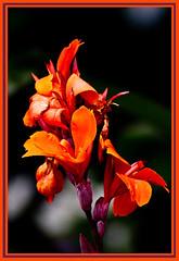 AH62_8132 (der_andyrandy) Tags: blumen blte garten natur macro makro outdoor wow orange canoneos7d amazingamazing thisphotorocks