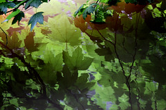 Reflections (GillK2012) Tags: nature leaves summer river reflections patterns abstract