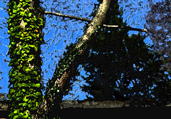 trees and debris (wildrosetn39) Tags: tree nature manipulation therapy skyblue
