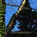 trees and debris