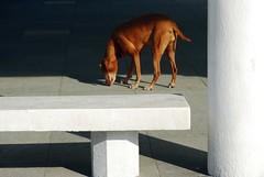 * (Where Is Now?) Tags: shadow dog nikon hong kong d60