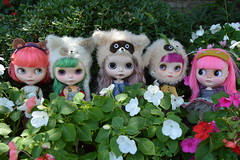 The Flower Garden Gang (nyssalily95) Tags: blythe doll mimsy mformonkey vainilladolly zaloa meimei tct tinycutethings