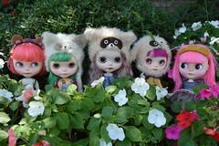 The Flower Garden Gang (nyssalily95) Tags: blythe doll mimsy mformonkey vainilladolly zaloa meimei tct tinycutethings