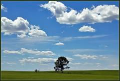 Big Brother, Big Sky (LavenderMillie) Tags: sky tree field clouds outdoors alberta lonetree