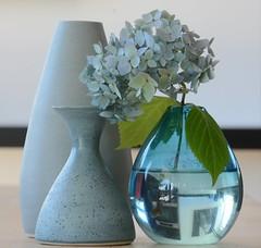 Grays + Blues (Heike Grodecki) Tags: stilllife vase flower hydrangea macro nature gray blue