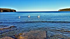 Three in a row (elphweb) Tags: pelican pelicans birds rocks headland coast australia falsehdr