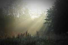 with the first  rays of dawn (S.Garten) Tags: sonne sonnenstrahlen dämmerung morgengrauen