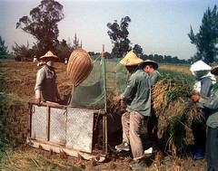 32-661 (ndpa / s. lundeen, archivist) Tags: nick dewolf nickdewolf 32 reel32 color photographbynickdewolf 1970s 1972 fall film 35mm winter republicofchina taiwan taiwanese china chinese rural rurallife people farm fielf fields paddy ricepaddy ricepaddies rice harvest harvesting harvestingrice workers working worker hat conicalhat traditionalhat hats conicalhats traditionalhats machine thresher ricethresher threshingrice partial endroll endofroll endoftheroll basket 1973