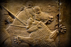 Detail of a Lion-Hunting Scene of Ashurbanipal II (Sumer and Akkad!) Tags: ashurbanipal mesopotamia nineveh iraq britishmuseum london lionhunting lion northpalace kouyunjik