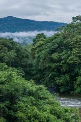_NGE7816.jpg (Nico_GE) Tags: selvahumedatropical colombia sancipriano pacifico comunidadesafro valledelcauca co