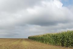 DSC_4607 (Frie Van Grunderbeeck) Tags: belgium belgi vlaamsbrabant hageland outdoor landschap landscape willebringen tienen wolk cloud corn graan mais veld field