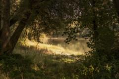 Uferlandschaft (novofotoo) Tags: baum bume fluss flussaue herbst inn landschaft natur wasser autumn landscape nature scenic tree trees water