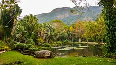 DSC_5426 (sergeysemendyaev) Tags: 2016 rio riodejaneiro brazil jardimbotanico botanicgarden     outdoor nature plants    green  beauty