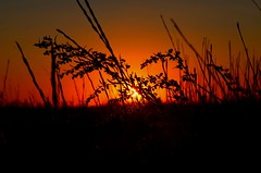 Evening in the field (Gudkov A) Tags: sunset summer field heat sun silhouette