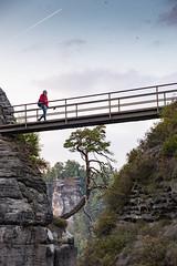 Two's Company (mraogr) Tags: bohemianswitzerlandnationalpark saxonswitzerlandnationalpark czechrepublic germany tree lonely lonetree basteibridge elbecanyon person bridge footbridge