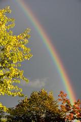 Somewhere over the rainbow (celine.garrabet) Tags: arcenciel pluie soleil automne feuilles mto