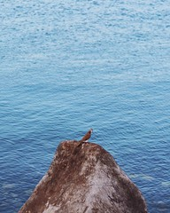 Peace Dove Rock Sea Water Eye4photography  Mydholidaymoments Bird One Animal Animal Themes Animals In The Wild Wildlife Rippled Perching Tranquility Nature Blue Seagull Cliff Day Tranquil Scene Scenics Beauty In Nature Outdoors In Front Of Nature (dinalfs) Tags: dove rock sea water eye4photography mydholidaymoments bird oneanimal animalthemes animalsinthewild wildlife rippled perching tranquility nature blue seagull cliff day tranquilscene scenics beautyinnature outdoors infrontof