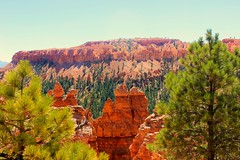 Hidden Deep Within the Canyon (Paige_Terhune) Tags: comment like first follow utah desert nature landscape travel nationalpark np brycecanyon