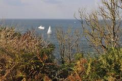 Ile de Houat (Cherryl.B) Tags: morbihan bretagne iles ponant pcheurs port plage rochers vgtation tourisme bateaux mer ocan arbustes fougres