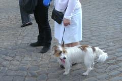Lige22042011 035 (Rumskedi) Tags: viacrucis monde chien europa europe rollei belgi belgique belgien lige lige22042011