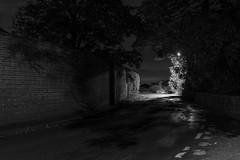Night Passage (bassvolumetreble) Tags: nikon d810 2470 2470mm f28 night nightphotography street streetlights streetlight streets tree trees shadow shadows silhouette road corner bend