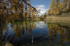 Autumn reflection in Casera lake (apemarco) Tags: orobie lake reflection lago casera autunno colours eosm canon samyang12 larch